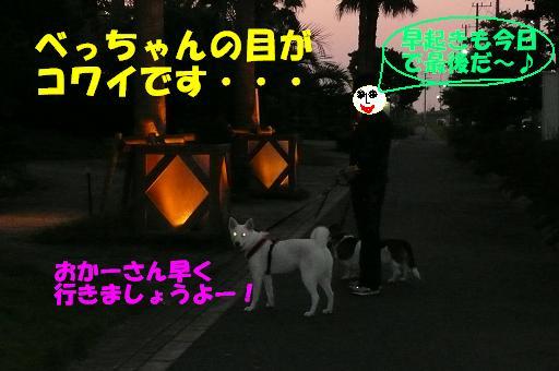 f0121712_546581.jpg