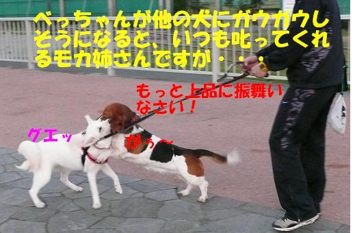 f0121712_549838.jpg