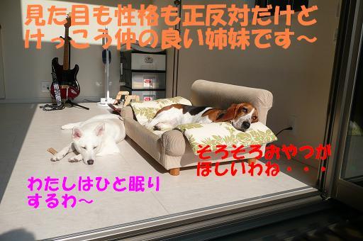 f0121712_5541324.jpg