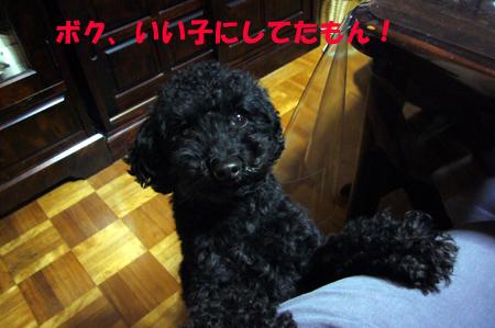 d0070047_0225738.jpg