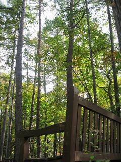 森の散歩_b0147051_11445216.jpg