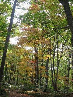 森の散歩_b0147051_11472483.jpg