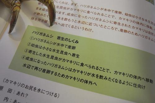 f0154796_18522550.jpg