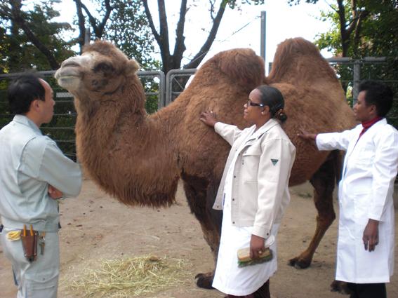 動物園で研修を受けました_f0199097_9151397.jpg