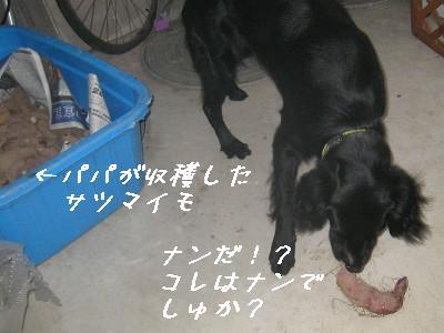 f0176499_18262276.jpg