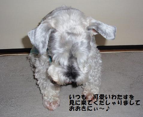 c0098501_17292026.jpg