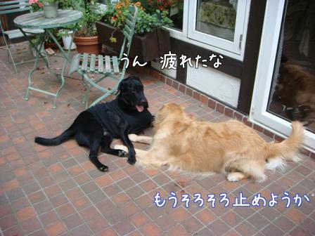 好き好き好き(その2)そしてお別れ_f0064906_21493135.jpg