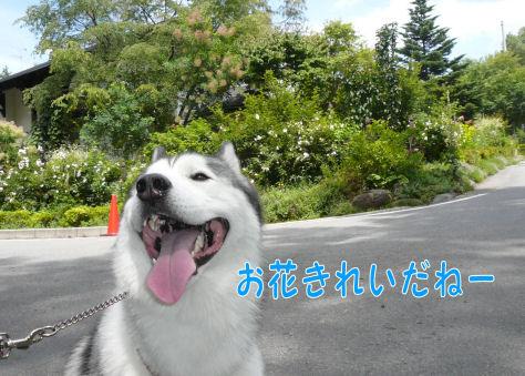 f0112407_0103941.jpg