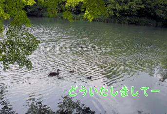 f0112407_14215932.jpg