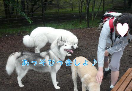 f0112407_14381010.jpg