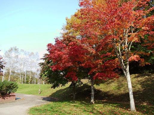 10月23日(木):枯葉散る散る_e0062415_200113.jpg