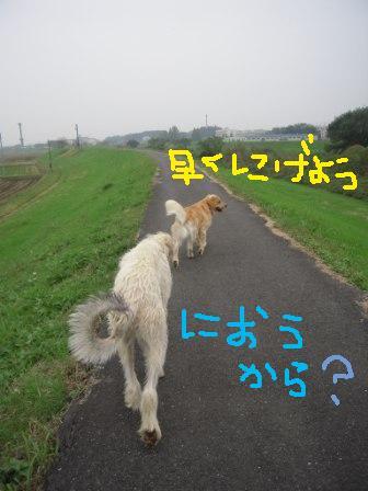 f0176830_17503551.jpg
