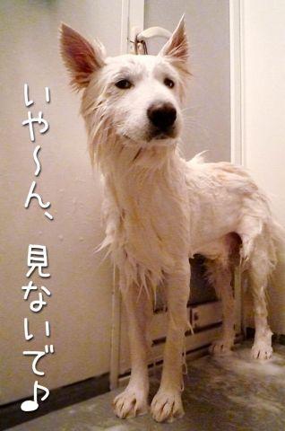 洗濯のち雨_c0062832_172131100.jpg
