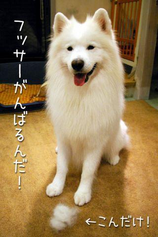 洗濯のち雨_c0062832_1722350.jpg