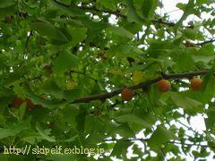 銀杏とご近所の秋_c0134734_1357971.jpg