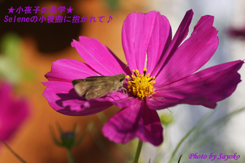 c0127335_475068.jpg
