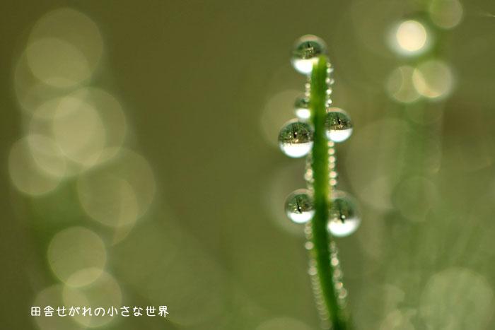 f0195740_15554973.jpg