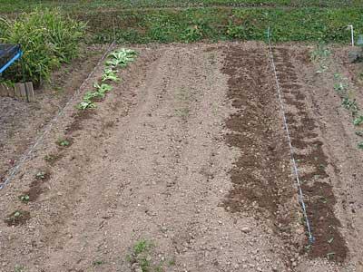 農作業の記録_c0063348_10543478.jpg