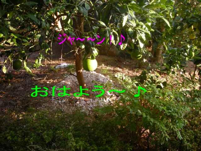 f0063889_14343672.jpg
