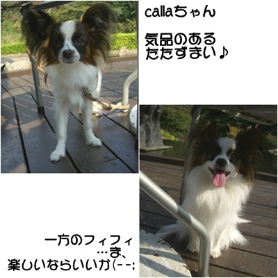 c0065512_2312693.jpg