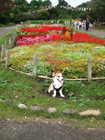 公園はしご_f0155118_7115382.jpg