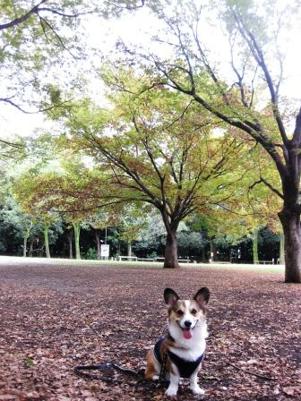 公園はしご_f0155118_7153990.jpg