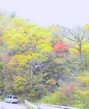 ヨジロウ谷あたりの紅葉_c0089831_10594921.jpg