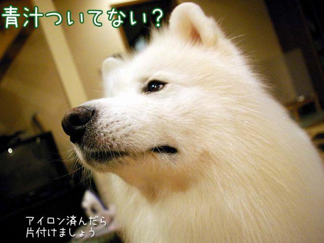 あおじるモニター_c0062832_18293718.jpg
