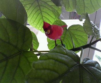 bird_f0158941_1324399.jpg