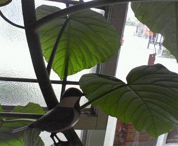 bird_f0158941_13245799.jpg
