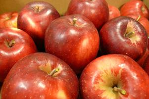 紅い林檎に唇よせて_a0017350_044484.jpg