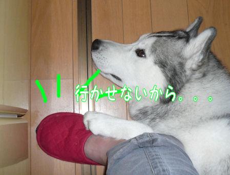 f0112407_91520100.jpg