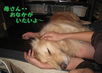 ポッキー、育児疲れ_e0136815_1043929.jpg