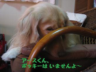 ポッキー、育児疲れ_e0136815_105164.jpg
