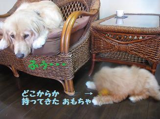 ポッキー、育児疲れ_e0136815_106401.jpg