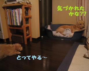 ポッキー、育児疲れ_e0136815_947773.jpg