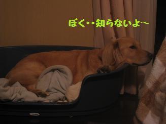 ポッキー、育児疲れ_e0136815_948069.jpg
