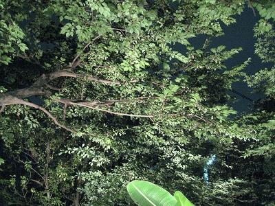 実りの秋!エゴの実の収穫。_e0010418_1620582.jpg