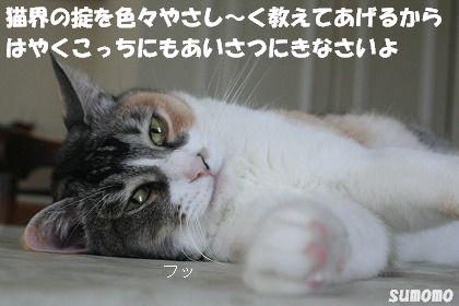 f0063729_10542166.jpg