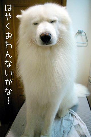 ゆる~く_c0062832_1771430.jpg
