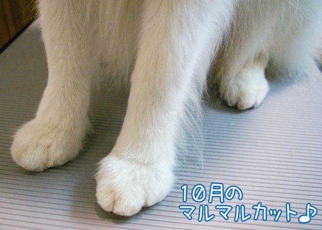 ゆる~く_c0062832_1775016.jpg