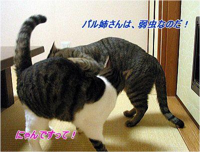 b0097848_18554292.jpg
