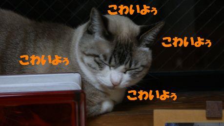 f0190851_1144013.jpg