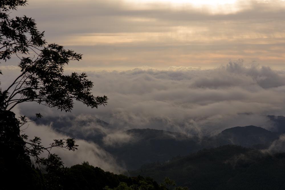 もののけの森のトトロの木_c0150383_16344127.jpg