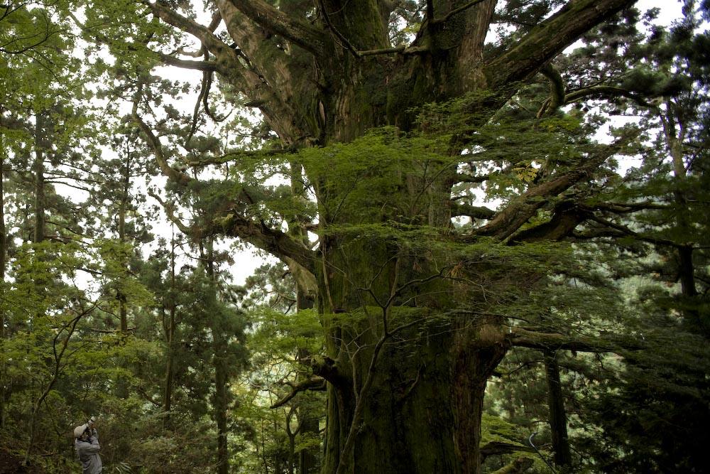 もののけの森のトトロの木_c0150383_16391215.jpg