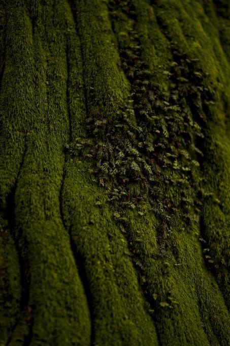 もののけの森のトトロの木_c0150383_16453744.jpg