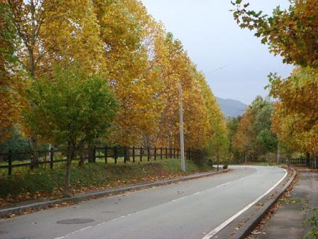いつもの散歩道が大分紅葉してきました。_f0064906_1723894.jpg
