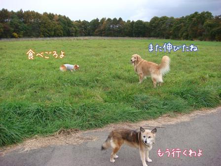 いつもの散歩道が大分紅葉してきました。_f0064906_17242446.jpg