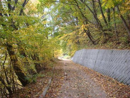いつもの散歩道が大分紅葉してきました。_f0064906_17262368.jpg
