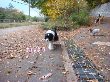 いつもの散歩道が大分紅葉してきました。_f0064906_1728559.jpg
